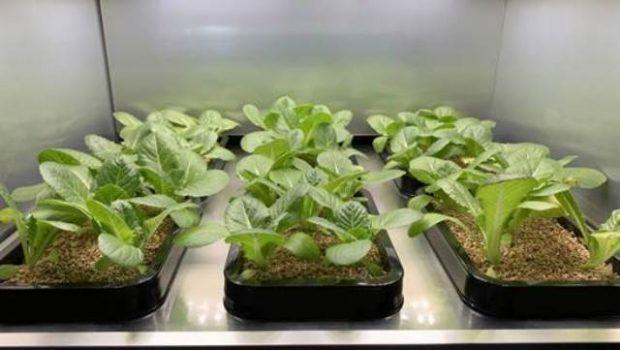 Ya podrás cultivar vegetales en el interior de tu casa gracias a este electrodoméstico de LG